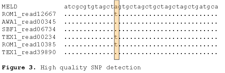 SNP detection from aligned sequence reads